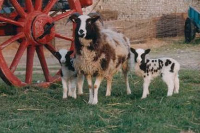 Image of Seven Sisters Sheep Centre